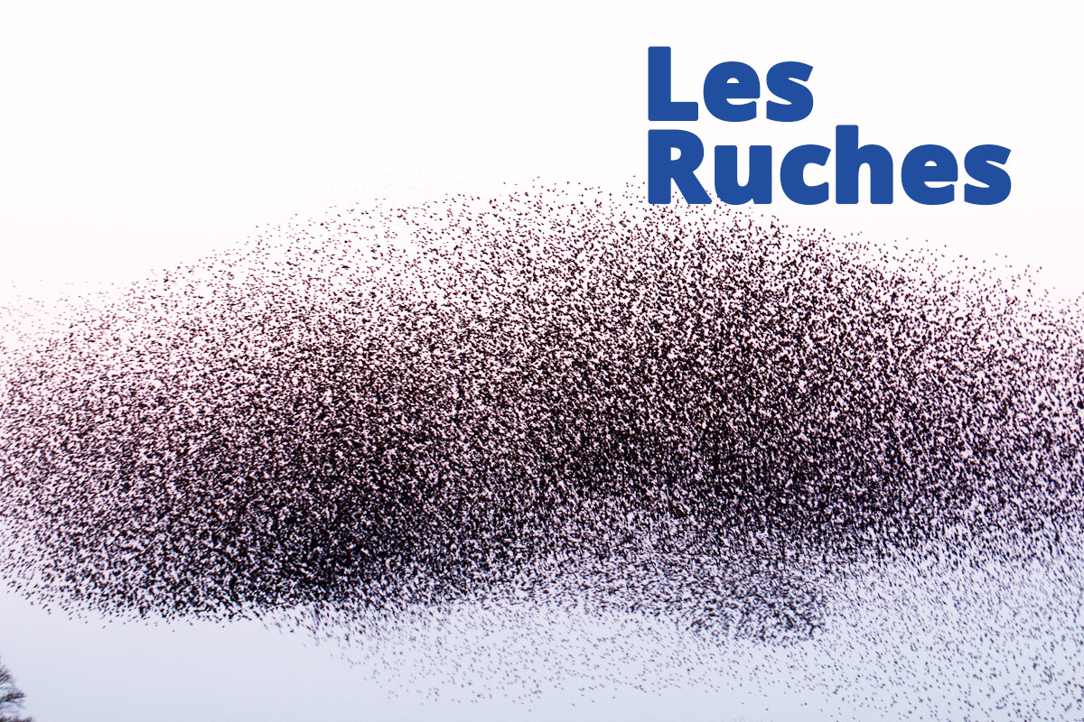 Les Ruches Workshop
